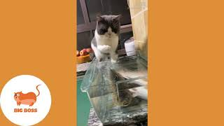 Cute Dogs and Cats   Funny Cats and Dogs Videos Compilation 2019  -  PLEASE SUBSCRIBE AND SUPPORT