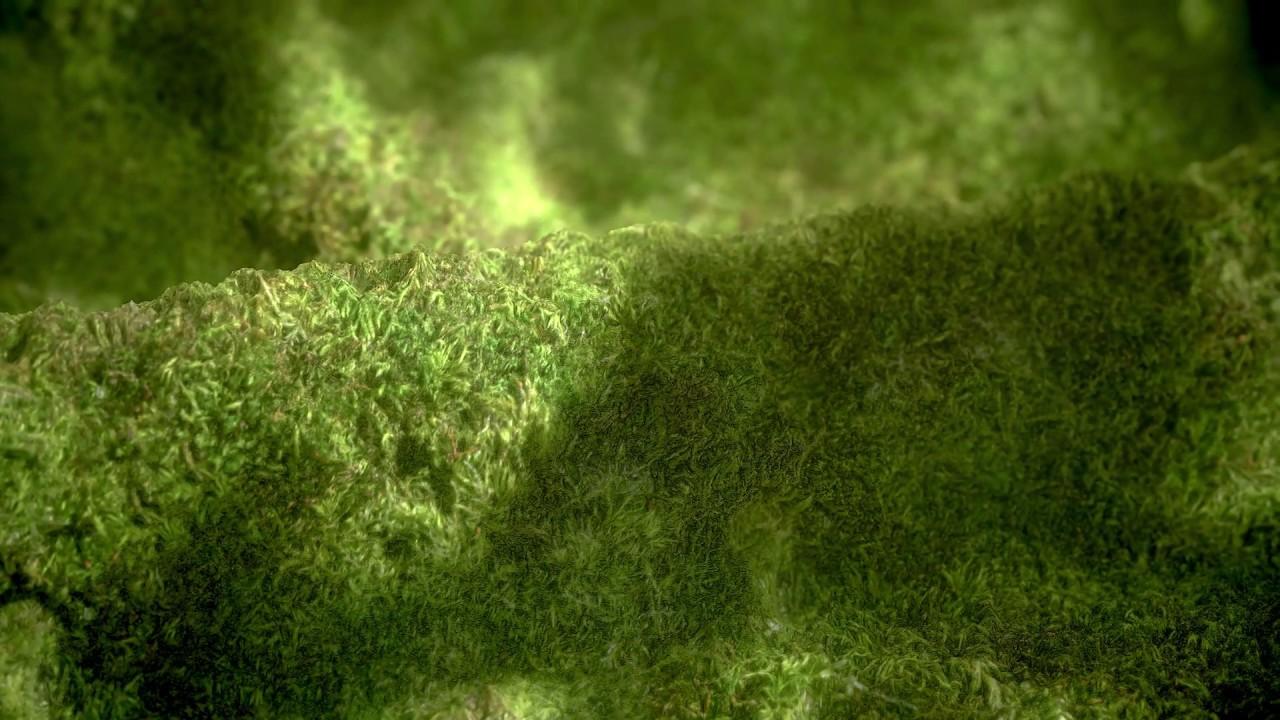 Freebie: Textures: Free 4K PBR Moss Material - Toolfarm