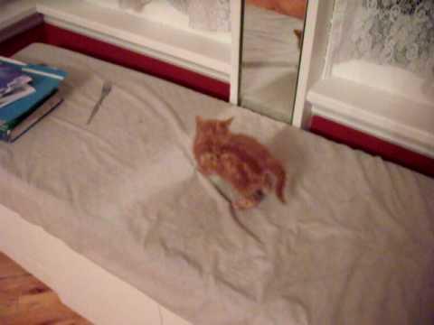 Kitten Sees Another Kitten