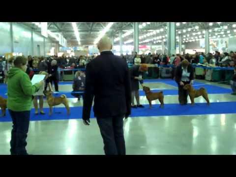Eurasia-1 2011, judge Ronald Sporr, Shar pei ring