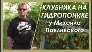 Выращиваем клубнику на малообъемной гидропонике(Два года опытов прошло перед тем, как Михаил Павливский запустил в работу свою первую полноценную плантаци..., 2014-09-05T08:44:43.000Z)