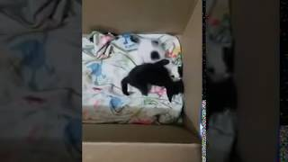 Cats funny video