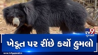 Banaskantha  Farmer Attacked By Bear Hospitalised  Tv9gujaratinews