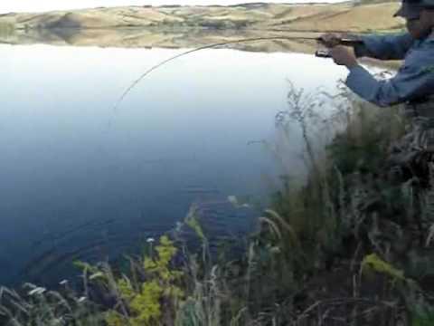 смотреть ловля окуня на спиннинг
