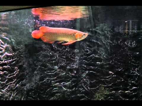 Video-2011-10-19-22-21-54.mp4