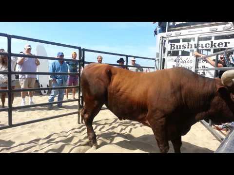 """""""Bushwacker"""" Hall of Fame  PBR Bull"""