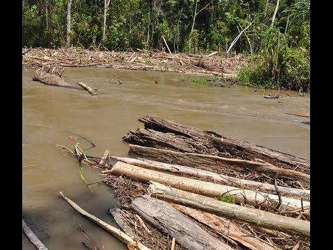 Santos oleos al rio Salaquí, afluente del Atrato