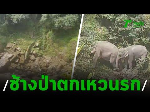 ช้างป่าตกเหวนรกเขาใหญ่ ตาย 6 ตัว   05-10-62   ไทยรัฐนิวส์โชว์