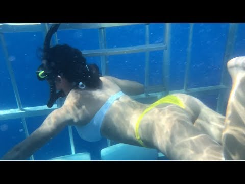 SHARK CAGE DIVING NORTH SHORE OAHU, HAWAII