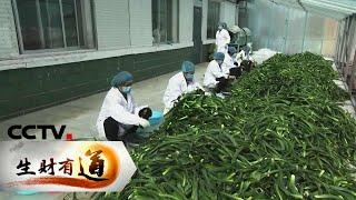 《生财有道》 20191022 吉林长白:有机特产 绿色财富| CCTV财经
