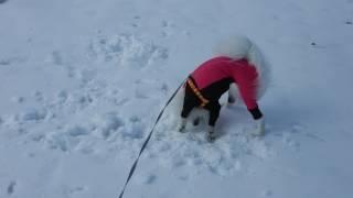 雪にスリスリして遊ぶみーちゃん.