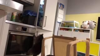 Енот открывает холодильник 😂🙈
