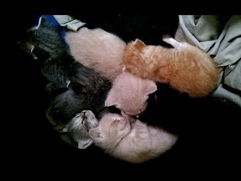 Pile Of Cute Kittens Sleeping