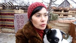 """Приют для собак """"Волчок"""". Челябинск."""
