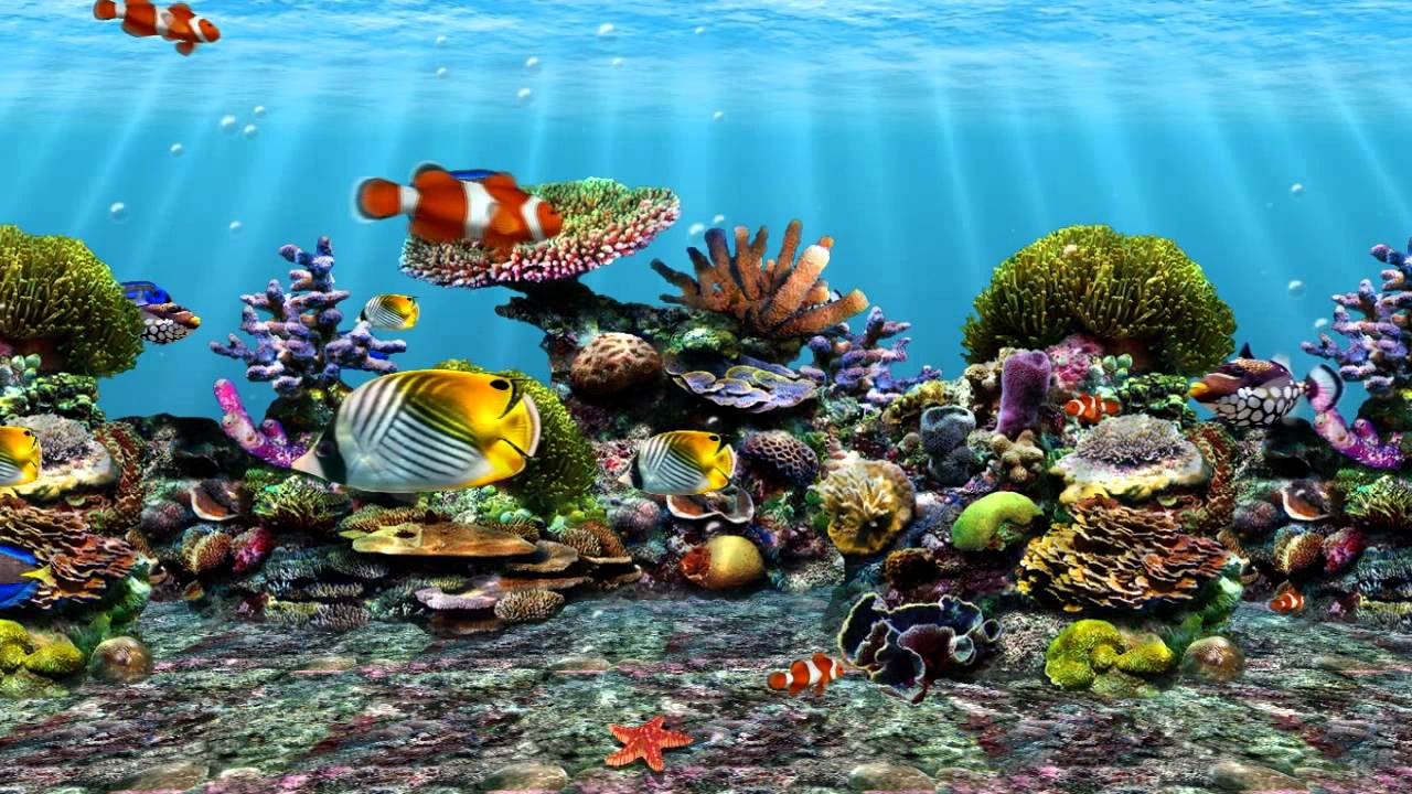 Wallpapers 3d Movimiento Para Windows 7 สกรีนเซฟเวอร์ปลา Fish Screensaver Youtube