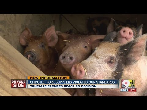 Chipotle carnitas dropped from menu - Pig farmer reacts to pork standards