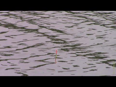 高温天气底钓鲫鱼没口,浮钓中上层鱼类狂口