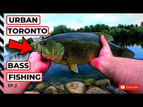 URBAN TORONTO SHORE FISHING For BIG LARGEMOUTH BASS!! (Lots Of Fish!)