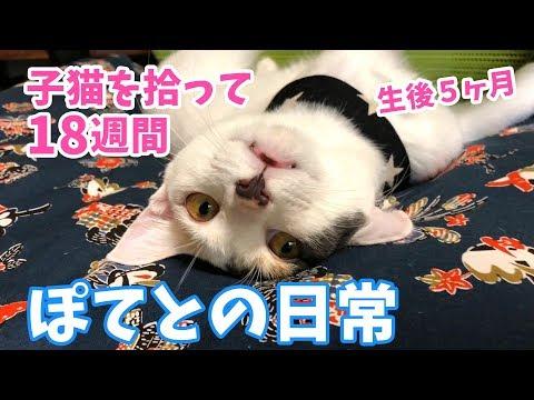 子猫を拾って18週間・ぽてとの日常【生後5ヶ月】