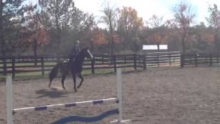 Meeko-Equitation Horse For Sale
