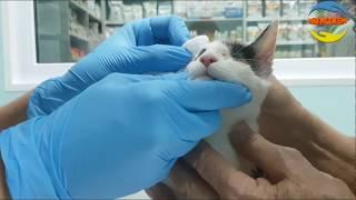 Слепой котенок! В клинике! Операция! Часть 3