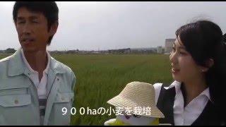 上郷地区の麦畑「きぬあかり」 20160425