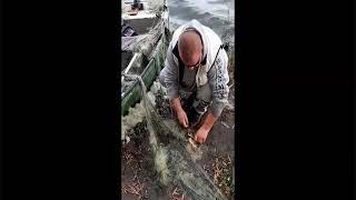 Kłusownictwo na jeziorze Jaśkowice Legnickie 01.11.2019 Uwalniamy ryby z siaty
