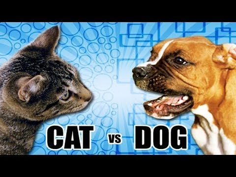 Cats vs Dogs Compilation 2018 HD FunnyCat