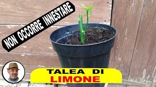 Download lagu TALEA DI LIMONE tutti i segreti
