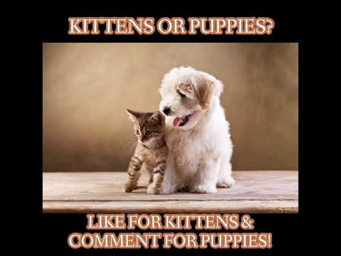 Kittens or Puppies?