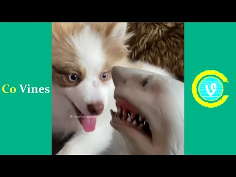 Try Not To Laugh Watching Shark Puppet Compilation 2020 (W/Titles) Funny Shark Puppet Videos