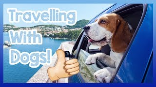 Travelling with a Dog! Tips for How to Travel with a Dog, Precautions for Cars and Public Transport! thumbnail