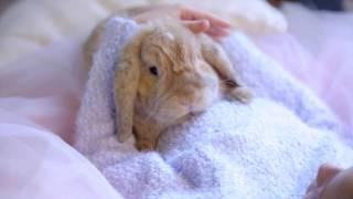 Детская фотосессия с кроликом