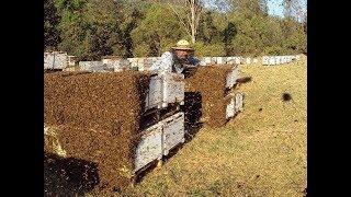 !!!!КАК НЕ НАДО ДЕЛАТЬ?!!!! Все Секреты Пчеловодства!!!!