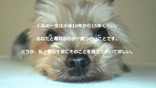 犬を飼う前に飼い主さんには 是非知っておいて頂きたい『犬の十戒』です...