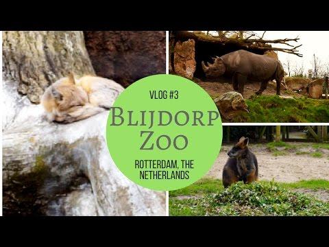 Blijdorp Zoo - Rotterdam, The Netherlands💞  Vlog #3