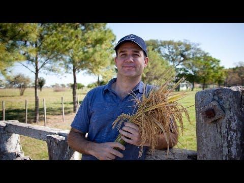 Argentina's Ferrari Farmer Triumphs in Rice Field