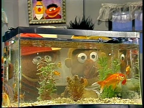 Sesame Street - Ernie And Bert Watch Goldfish (1980)