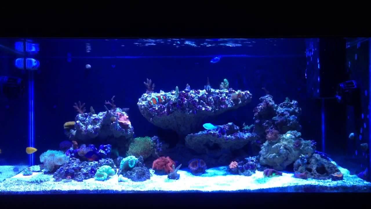 40 breeder Kessil A360w reef aquarium  YouTube