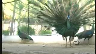 Colors of Pakistan - Birds of Pakistan