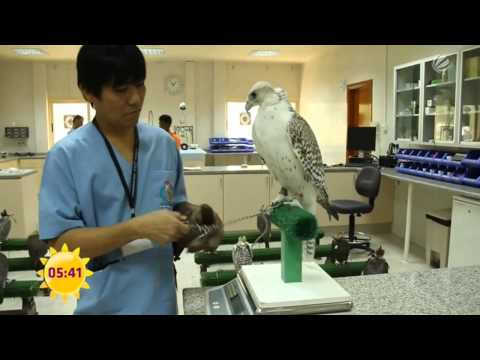 Reise-Tipp: Arabische Emirate, das Abu Dhabi Falcon Hospital | Reisefieber Asien