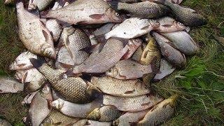 секреты рыбалки ловля леща в проводку на реке РСН _ bream in the wiring on the river