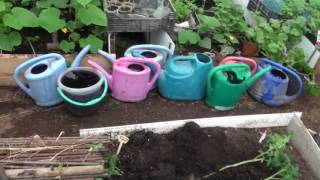 Я высаживаю томаты таким методом   17 апреля 2017 года
