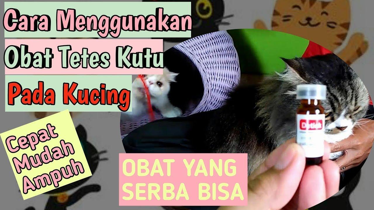 Cara Menggunakan Obat Tetes Kutu Pada Kucing Detick Obat Kutu Obat Kutu Kucing Paling Ampuh Youtube