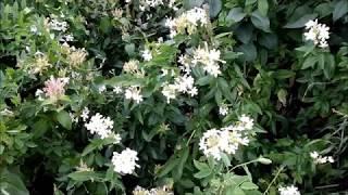 O-zone (Sergio Tacchini) Perfume review - Обзор аромата - Видео от RelaxReview