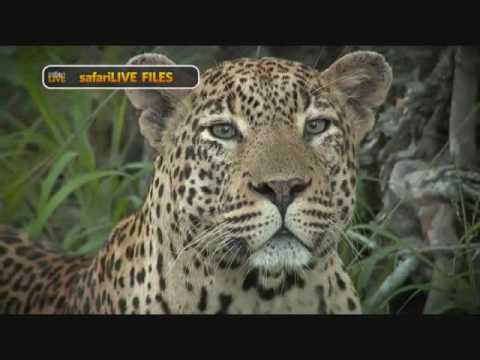 PM Safari Drive Live on Nat Geo Wild TV from Djuma Game Reserve  4:00 PM  Dec 15, 2016
