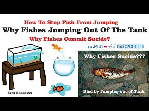 Why Fishes Jump Out Of The Aquarium Why Fishes Commit Sucide? Hindi English Sub