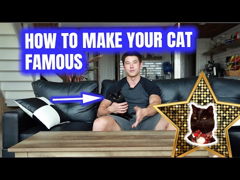 MAKE YOUR CAT FAMOUS