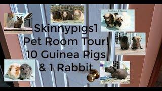Skinnypigs1 Pet Room Tour 2018