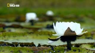 National Geographic. Дикая природа Амазонки. Колыбели жизни.